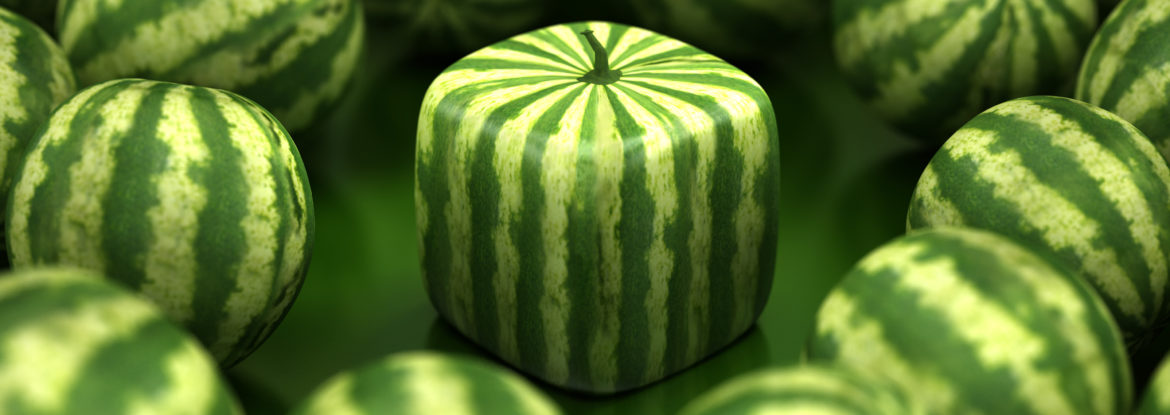 Cube shaped watermelon stands out among regular ones. Difference and individuality concept.Similar images: